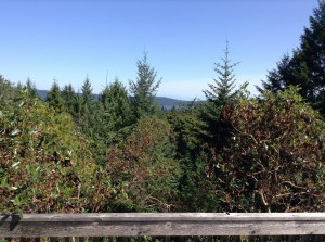 The view from where I meditate on Salt Spring Island, B.C.